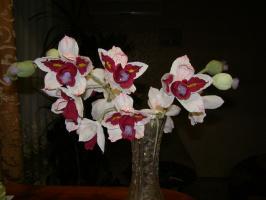Орхидея с конфетами.