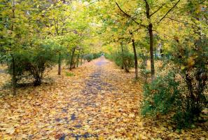 Откружилась желтая листва