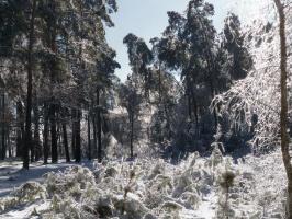 Серебро зимы