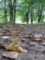 2 незаметно подкралась осень 4