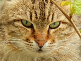 Кот барсик
