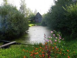 Заброшенный деревенский пруд.