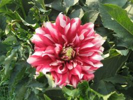 цветы2010г. 118