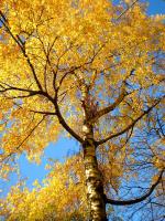 Осенние кружева.
