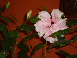 розовый со вспышкой