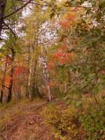 Осенний светофор