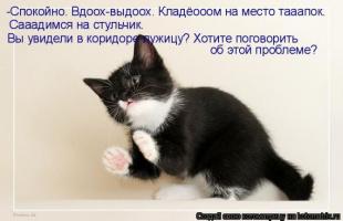 kotomatrix_18