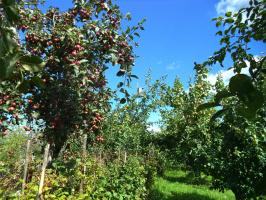 """Здесь когда-то """"бушевал май..."""". Пучеж будет с яблоками!"""