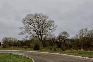 """Что за """"шары"""" висят на ветвях дерева?"""