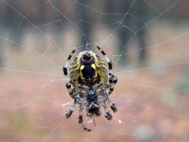 на паутинке