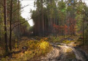 """""""Внимание – на дороге осень!"""""""
