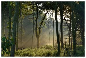 Утро в лесу.