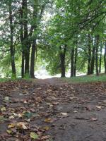 Незаметно подкралась осень