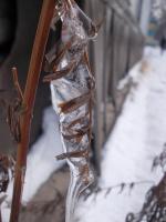 Симбиоз льда и растения