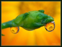 Причуды дождя