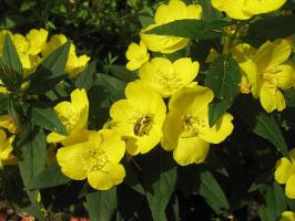 Монастырские цветы