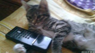 Кошка Ася.
