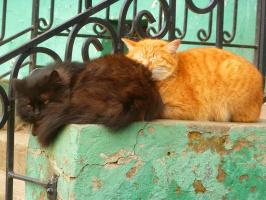 Рыжий кот и чёрная кошка на крыльце