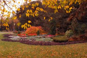 Цветы-многолетники: выбираем растения для потрясающей клумбы