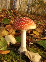 Какая же осень без грибов...:)