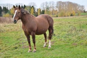 Конь буланый