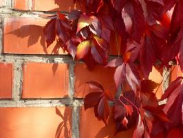 от осени не спрятаться, не скрыться