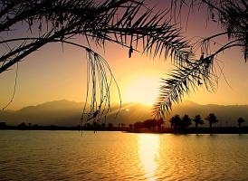 Волшебны краски небосвода, сквозь ветви пальмы свет восхода...