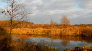 Ноябрьский пейзаж.