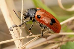 весёлый жук