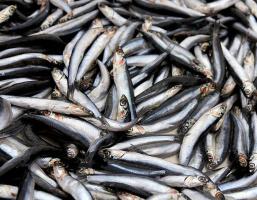 Рыбка на базаре
