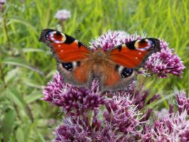 И танцуют бабочки - подружки