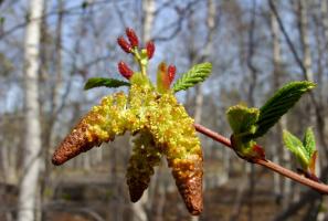 В ожидании весны
