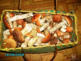Иногда бывает и так , идёшь на рыбалку , приносишь грибов.
