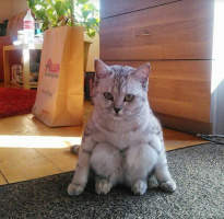 Смешной котик, присел