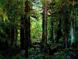 Сумеречный лес Хилкровса