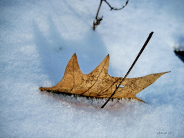 Снегом запорошило