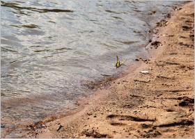 Полет бабочки над кромкой воды