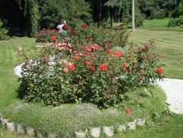 Как хороши, как свежи были розы . . .