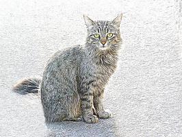Серый кот на асфальте, имитация рисунка