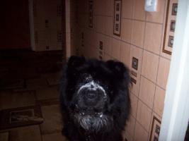мой пес- Барик с прогулки пришел