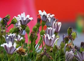 Цветочный колорит ВЕСНЫ (Серия)