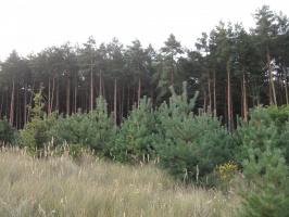 Лес в своем величии.