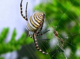 Что будет, если один паук попадёт в сети другого паука?