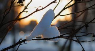 С любовью от зимы