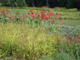А эти цветы часто высаживают в южных парках