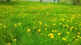 Пучежские поляны...Май 2016.