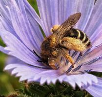 Надо мной жужжит под ухом вечная пчела :)))))