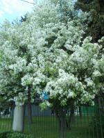 Так хочется цветущих деревьев..