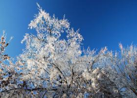 Зимние листья