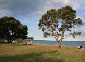 Деревья Новой Зеландии.